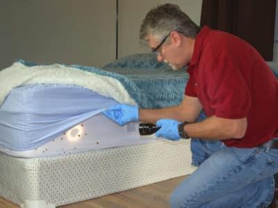 Applicateurs 3D qui examine cherche des punaises de lit