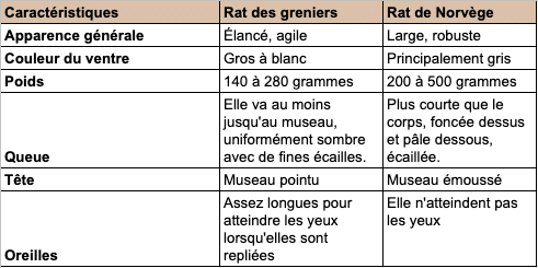 Tableau de comparaison des caractéristiques du rat brun et du rat noir