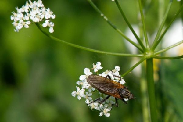 Petite insecte sur une fleur