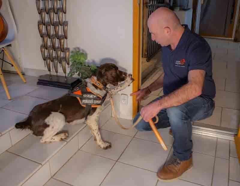 l'expert au travail avec son chien détecteur de punaises de lit