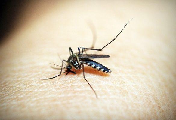 moustique en gros plan sur de la peau