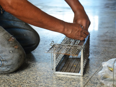 Installation piège à rongeurs