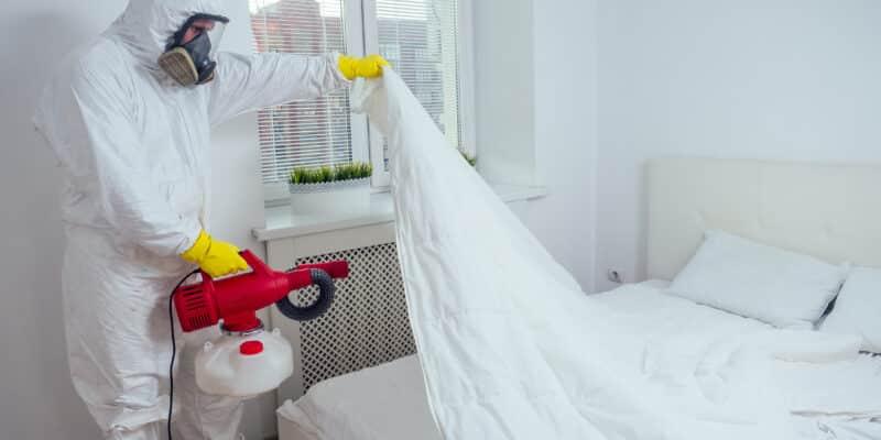 Intervention pour se débarrasser des punaises de lit